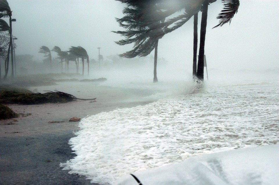 Hurricane hitting a beach and ripping branches off of palm trees