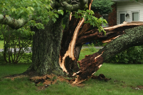 How To Spot Hazardous Trees on your Property