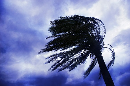 Palm tree blowing around in wind