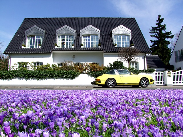 Field of purple flowers with a yellow car and white house with black shingles in the background