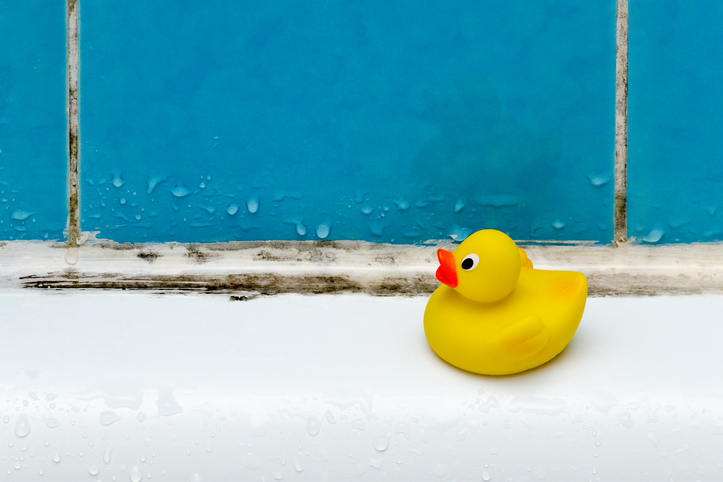 Rubber ducky sitting on edge of a moldy bathtub with dirty grout