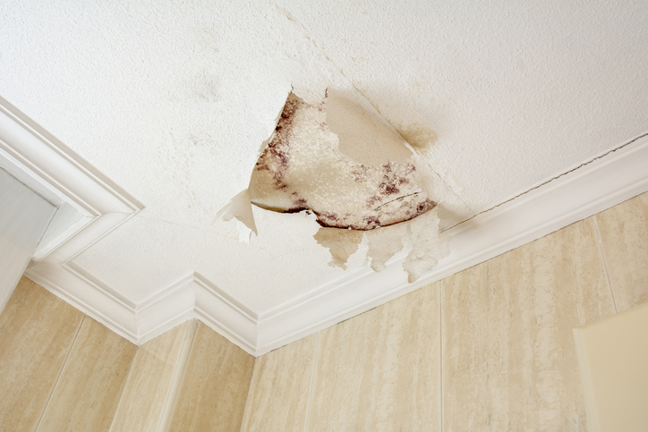 finding-mold-in-your-home