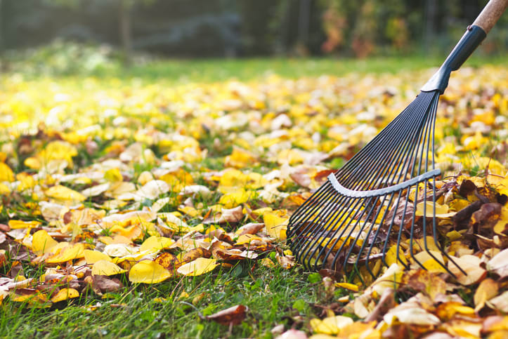 Cleaning fall leaves in IL